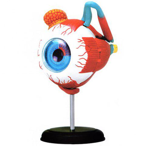 126mm 3D Structure Eyeball Model Human Anatomy Medical Intelligent Toy Gift - multicolor
