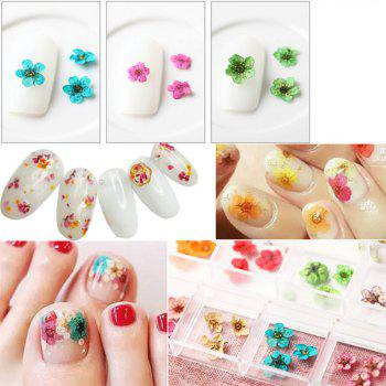 1 Box Mixed Style Natural Dried Flower Nail Art Decoration - COLORMIX