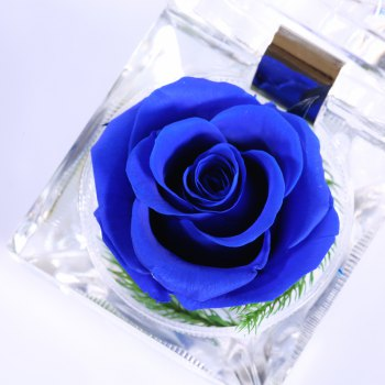 2018 handmade preserved fresh rose upscale immortal flowers gifts, Ideas