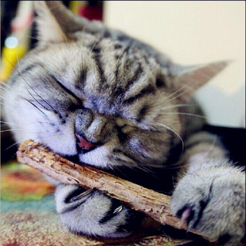 Pet Products Cat Supplies Molar Tooth Cleaning Stick Natural Wood - BROWN