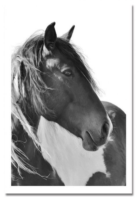 Photography A Beautiful Horse Print Art - multicolor